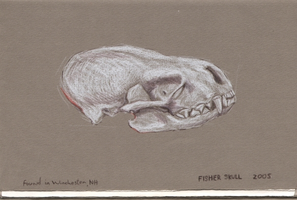 Fisher Skull Drawing